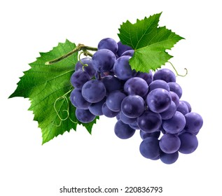 Purple Isabella grapes bunch isolated on white background as package design element