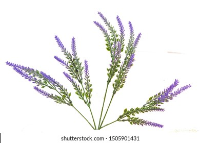 Purple lavender picture lavender overlay