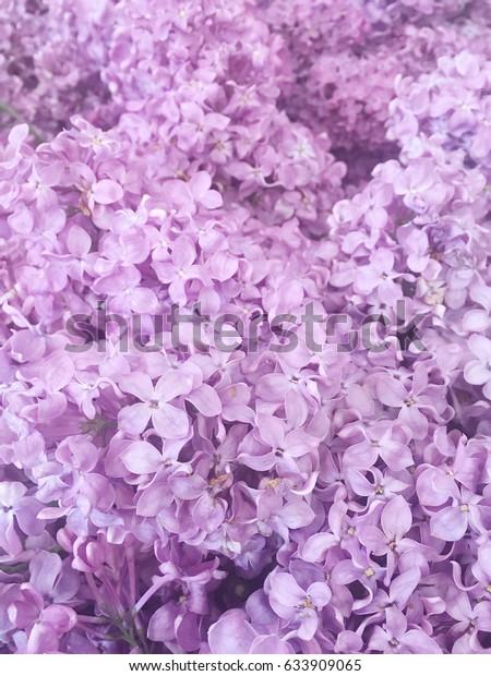 Foto De Stock Sobre Purple Lilac Purple Lilac Background