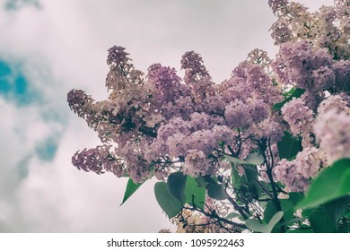 purple lilac and epic clouds