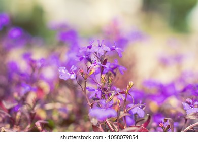 Purple lilac flowers at the city park alley background. Beautiful spring background, close up, shallow depth of field.
