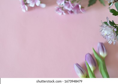 purple and lilac flowers and tulips on a pink background. spring, summer concept, background for cards and cosmetics
