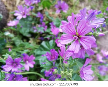 Purple and lilac geranium flowers close up in the garden. Wild colorful flowers in a field, macro photography. - Shutterstock ID 1117039793