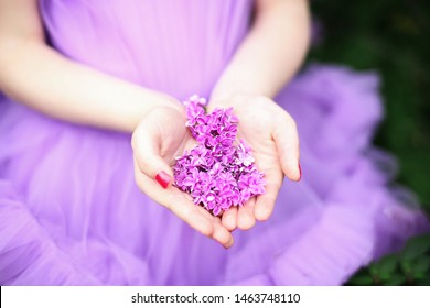 Purple lilac on the palm of a man, soft focus. Summer fragrant lilac flowers.  Purple flowers on the palm of the girl. Lilac in female hands. Lilac petals in the hands of the girl. Gardening