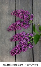 purple lilac on wood