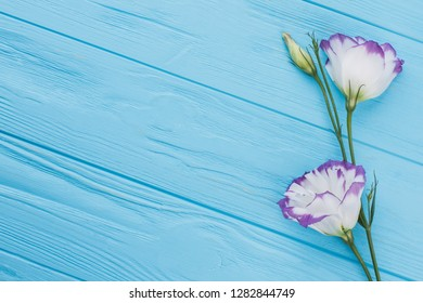 Purple lisianthus or eustoma flowers on blue wood background. Free space for text, copyspace.