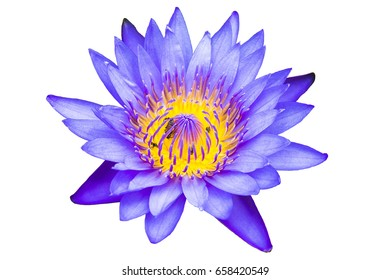 Blue Lotus Flower Images Stock Photos Vectors Shutterstock