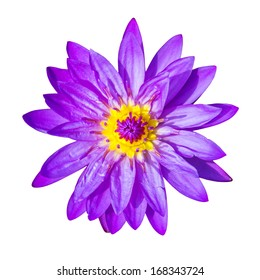 Purple lotus flower isolated, with clipping path.