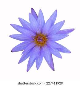 Purple Lotus isolated on white background