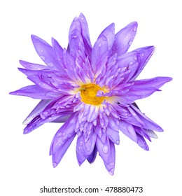 Purple lotus isolated on white background, top view