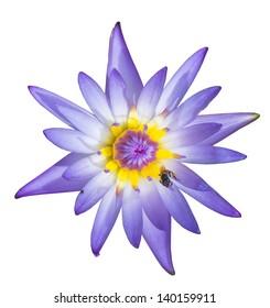 Purple Lotus isolated white on background, Lotus isolated