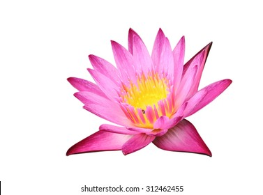 Purple lotus on white background