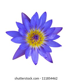 Purple lotus with white background