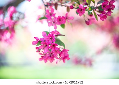 Purple magenta flowers