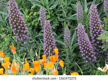 Purple and orange flowers in a garden