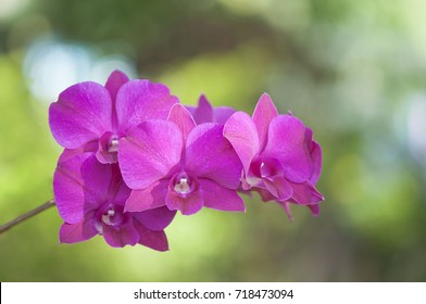 Purple orchid background blurred