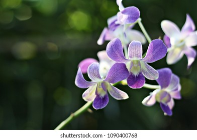 Purple Orchid closeup background