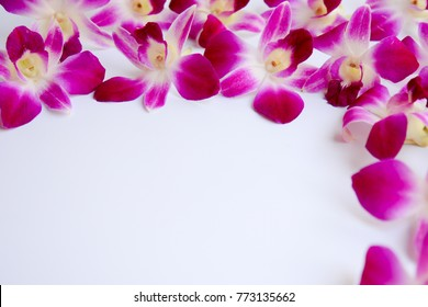 Purple orchid of dendrobium on white background with copy space for texts. Selective focus.