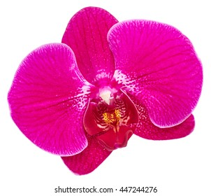 Purple orchid flower close up isolated on white background