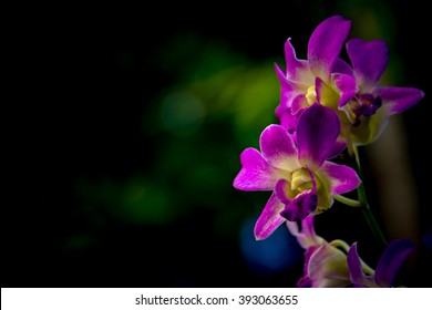 The purple orchid flower , digital effect abstract for background