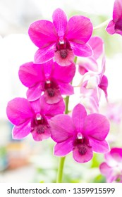 purple orchid flowers with natural background