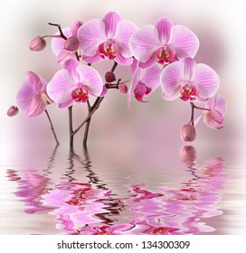Purple orchid flowers with water and reflection