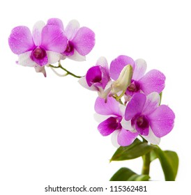 purple orchid with fresh water dew on white background
