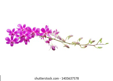 Purple orchid isolated on a white background.