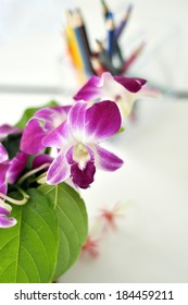 purple orchid in living room and color