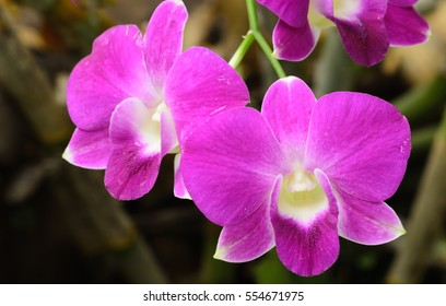 Purple orchid in nation park