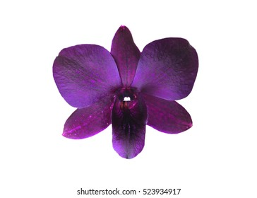 purple orchid in nature fresh amazing orchids points on white and violet