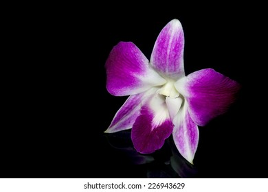 The purple orchid on the black background