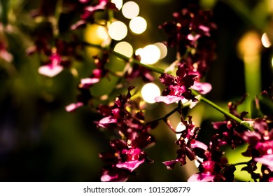 Purple Orchid on a Bokeh Background