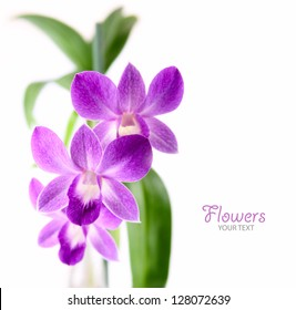 purple orchid on isolated background