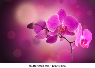 The Purple Orchid on Romantic Bokeh Background