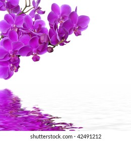 purple orchid with reflection