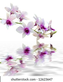 A purple orchid set against a plain background with reflection in water