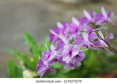 Purple orchid with space