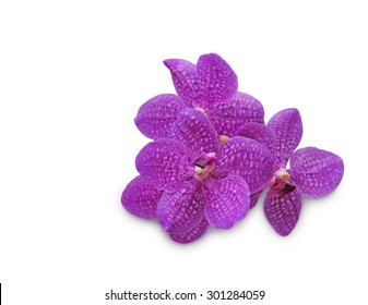 Purple orchid (Vanda coerulea) on white background