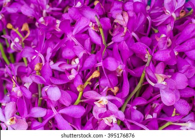 Purple orchids background / Purple flowers orchids background