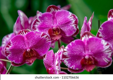 Purple orchids fine texture detailed