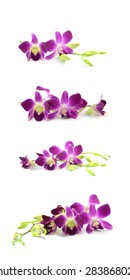 Purple orchids isolated on white background.