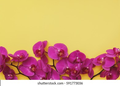 Purple Orchids on yellow paper background. Top view, blank space