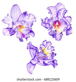 Purple orchids. Tropical flowers. Watercolor illustration isolated on white background.