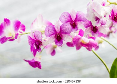 Purple orchids, with water droplets, in soft color and soft blurred style, on vintage background.