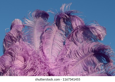 A purple ostrich feather fan stands out against a blue sky