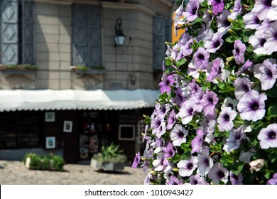 purple petunia flowers against the background of old Europe street with buildings,  streets