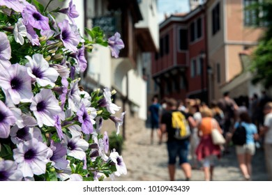 purple petunia flowers against the background of old Europe street with buildings, people, streets