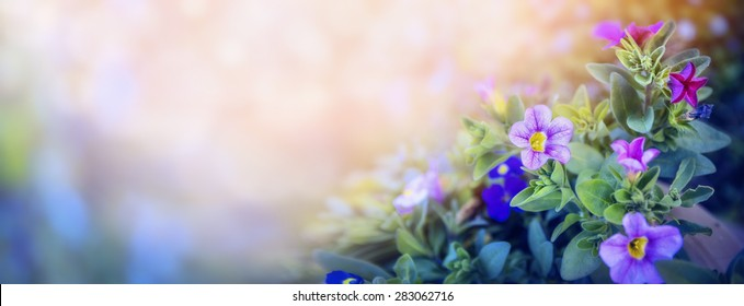 Purple petunia flowers bed on beautiful blurred nature background, banner for website with garden concept, toned