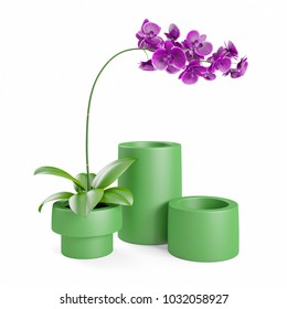 Purple, pink branch orchid flowers with green leaves, green ceramic vase, Orchidaceae, Phalaenopsis known as the Moth Orchid, abbreviated Phal. White background. 3D Rendering, Illustration.